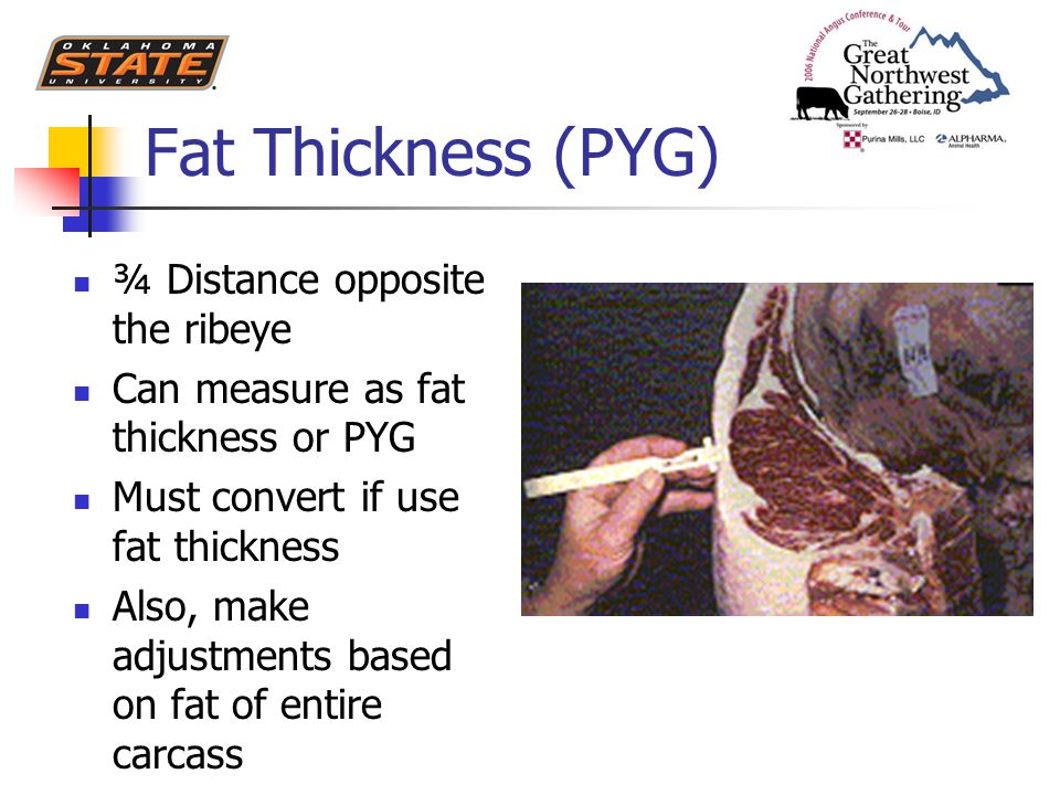 Fat Thickness (PYG) ¾ Distance opposite the ribeye Can measure as fat thickness or PYG Must convert if use fat thickness Also, make adjustments based on fat of entire carcass