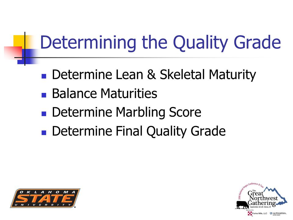 Determining the Quality Grade Determine Lean & Skeletal Maturity Balance Maturities Determine Marbling Score Determine Final Quality Grade