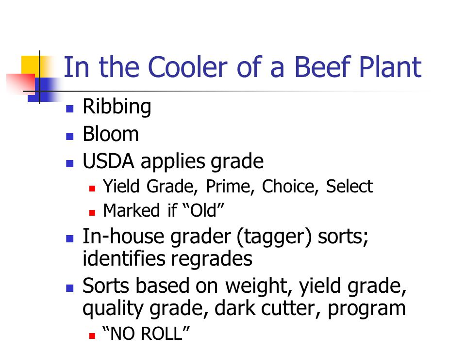 In the Cooler of a Beef Plant Ribbing Bloom USDA applies grade Yield Grade, Prime, Choice, Select Marked if Old In-house grader (tagger) sorts; identifies regrades Sorts based on weight, yield grade, quality grade, dark cutter, program NO ROLL