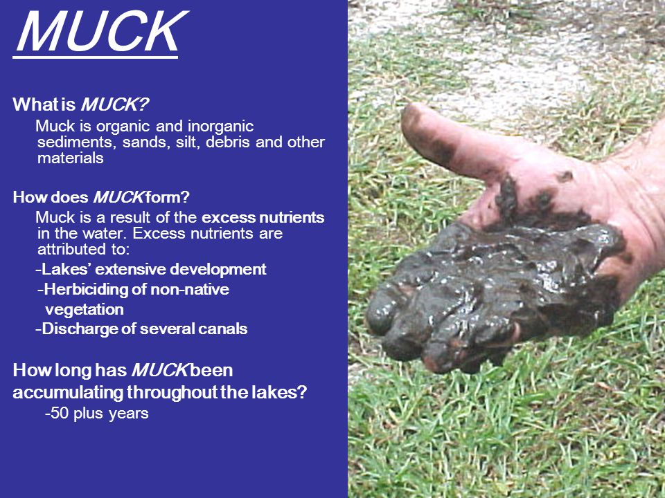 MUCK What is MUCK.