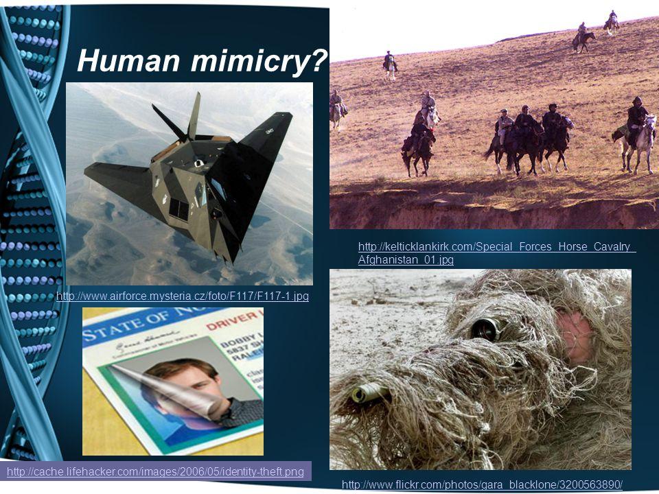 Human mimicry.