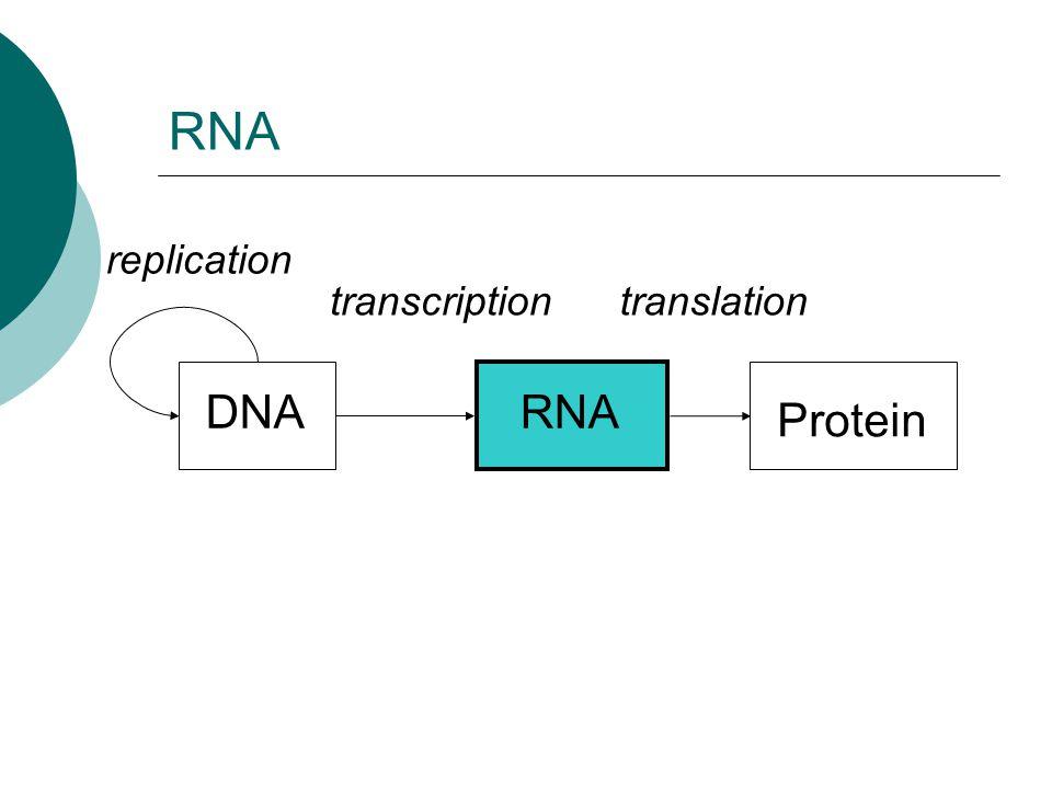 DNARNA Protein replication transcriptiontranslation RNA