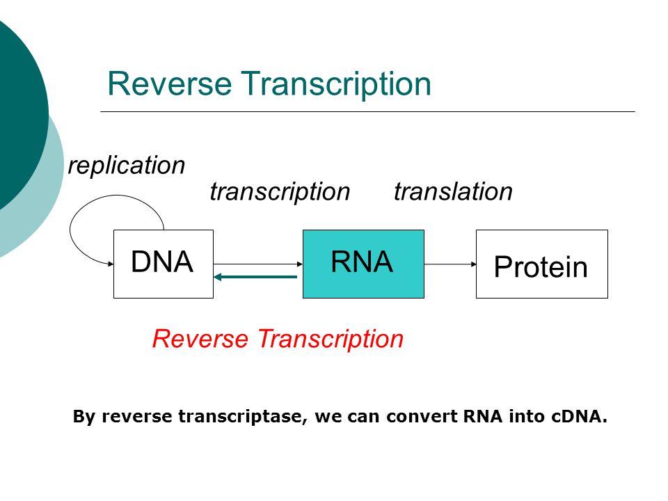 DNARNA Protein replication transcriptiontranslation Reverse Transcription By reverse transcriptase, we can convert RNA into cDNA.