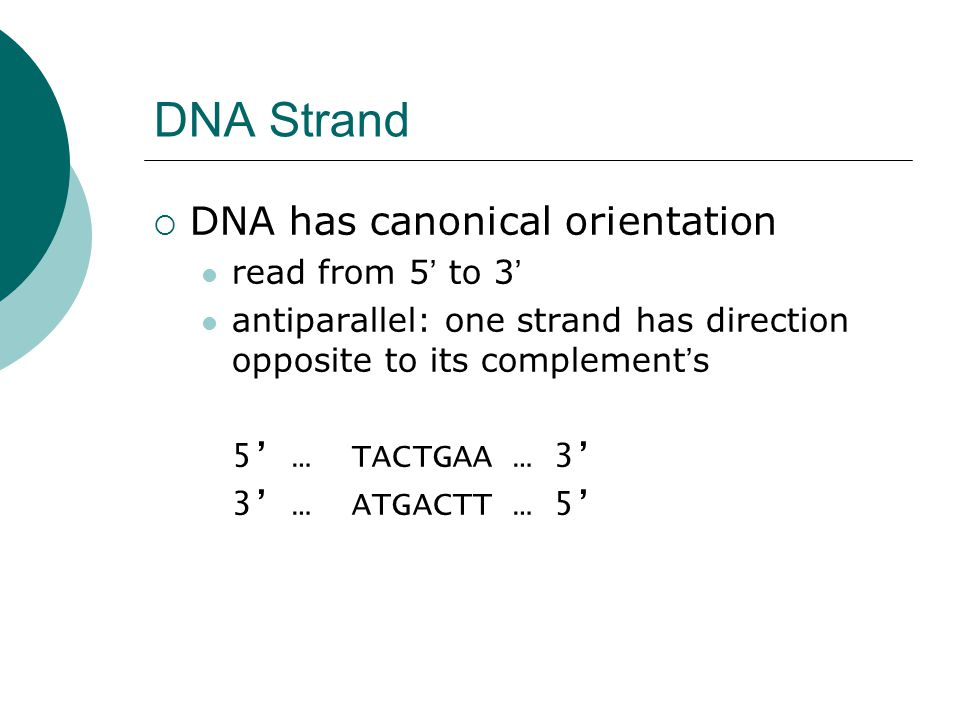 DNA Strand  DNA has canonical orientation read from 5 ' to 3 ' antiparallel: one strand has direction opposite to its complement ' s 5' … TACTGAA … 3