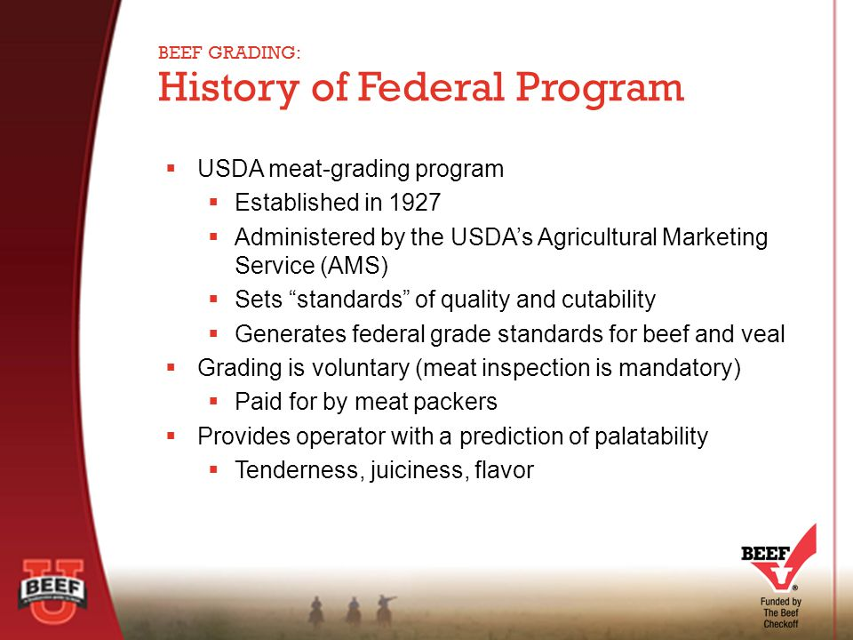  USDA meat-grading program  Established in 1927  Administered by the USDA's Agricultural Marketing Service (AMS)  Sets standards of quality and cutability  Generates federal grade standards for beef and veal  Grading is voluntary (meat inspection is mandatory)  Paid for by meat packers  Provides operator with a prediction of palatability  Tenderness, juiciness, flavor History of Federal Program BEEF GRADING: