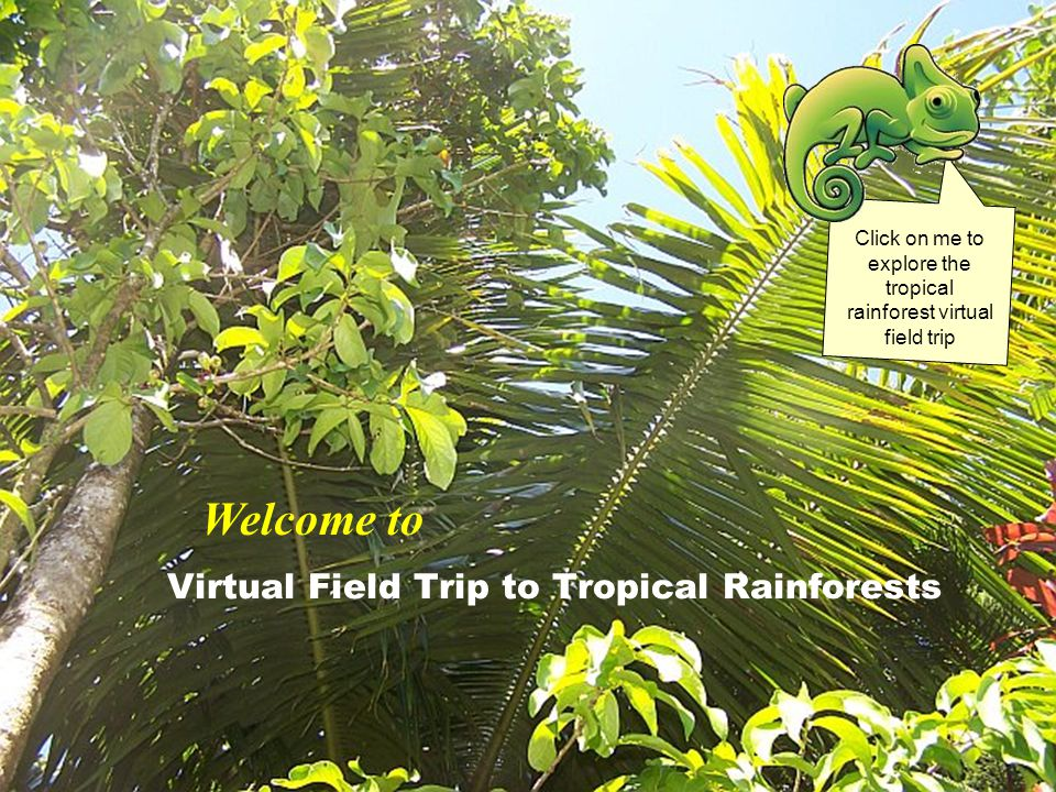 Virtual Field Trip to Tropical Rainforests Click on me to explore the tropical rainforest virtual field trip Welcome to