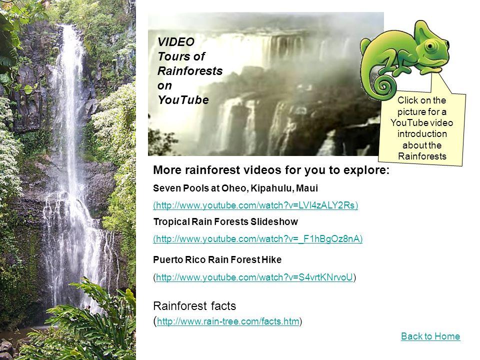Waterfalls Back to Home Waikamoi Stream Hana Rainforest Maui video of many waterfalls (http://www.youtube.com/watch?v=Hw_TeY0CxCU)http://www.youtube.com/watch?v=Hw_TeY0CxCU These are two of the many waterfalls in the rainforest on Maui.