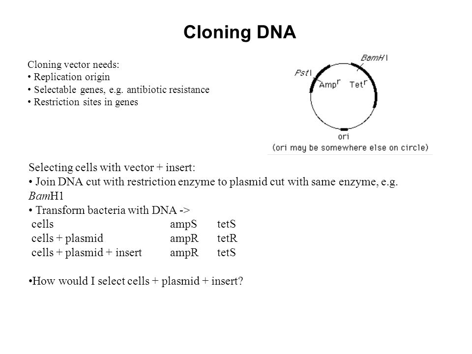 Cloning DNA Selecting cells with vector + insert: Join DNA cut with restriction enzyme to plasmid cut with same enzyme, e.g.
