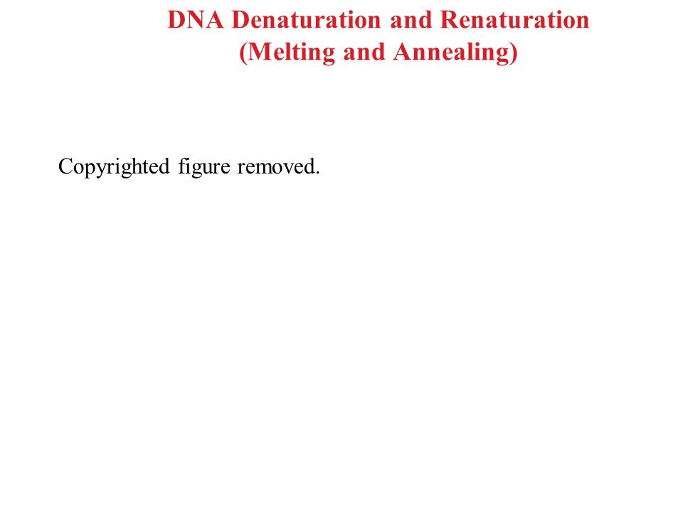 DNA Denaturation and Renaturation (Melting and Annealing) Copyrighted figure removed.