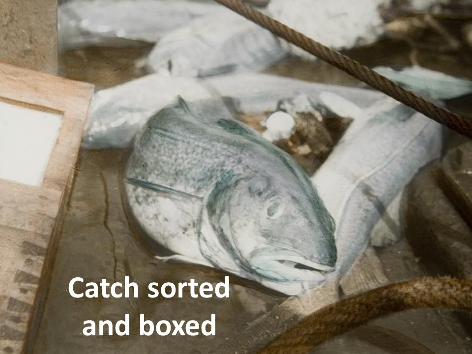 Catch sorted and boxed