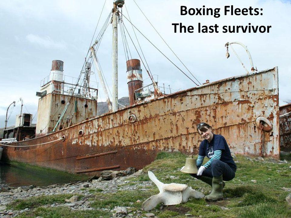 Boxing Fleets: The last survivor