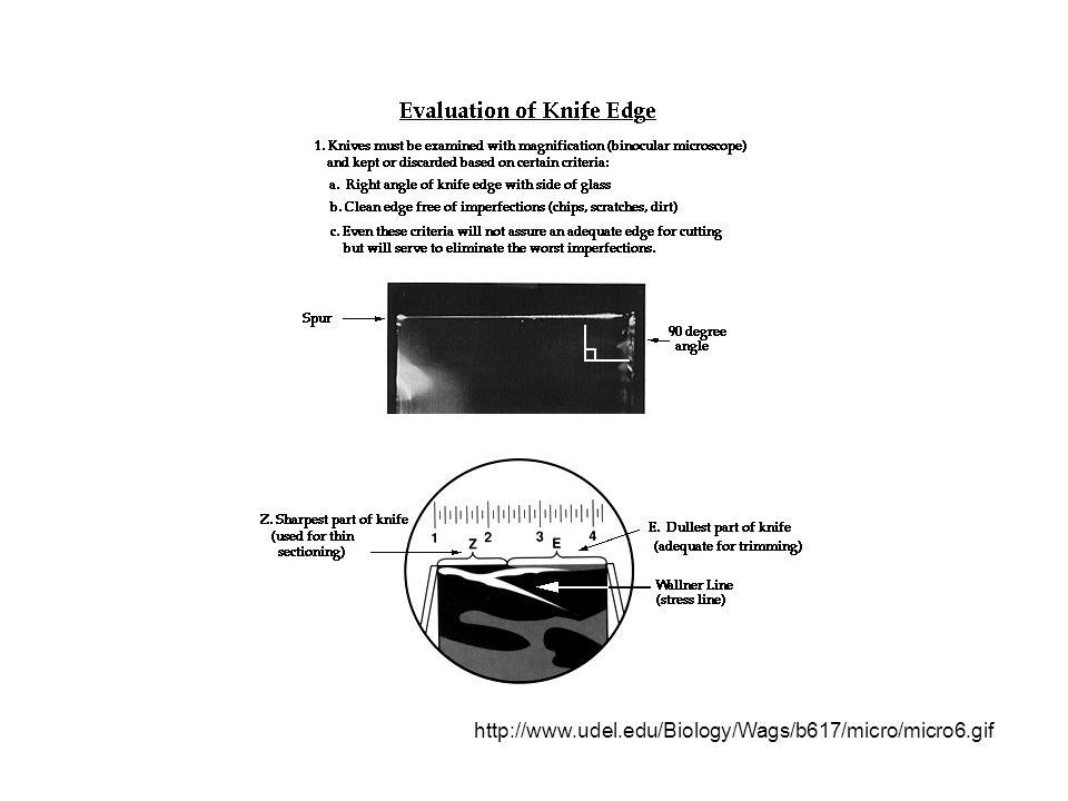 http://www.udel.edu/Biology/Wags/b617/micro/micro6.gif