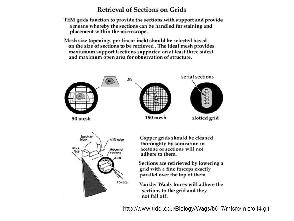 http://www.udel.edu/Biology/Wags/b617/micro/micro14.gif