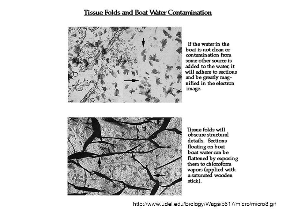http://www.udel.edu/Biology/Wags/b617/micro/micro8.gif