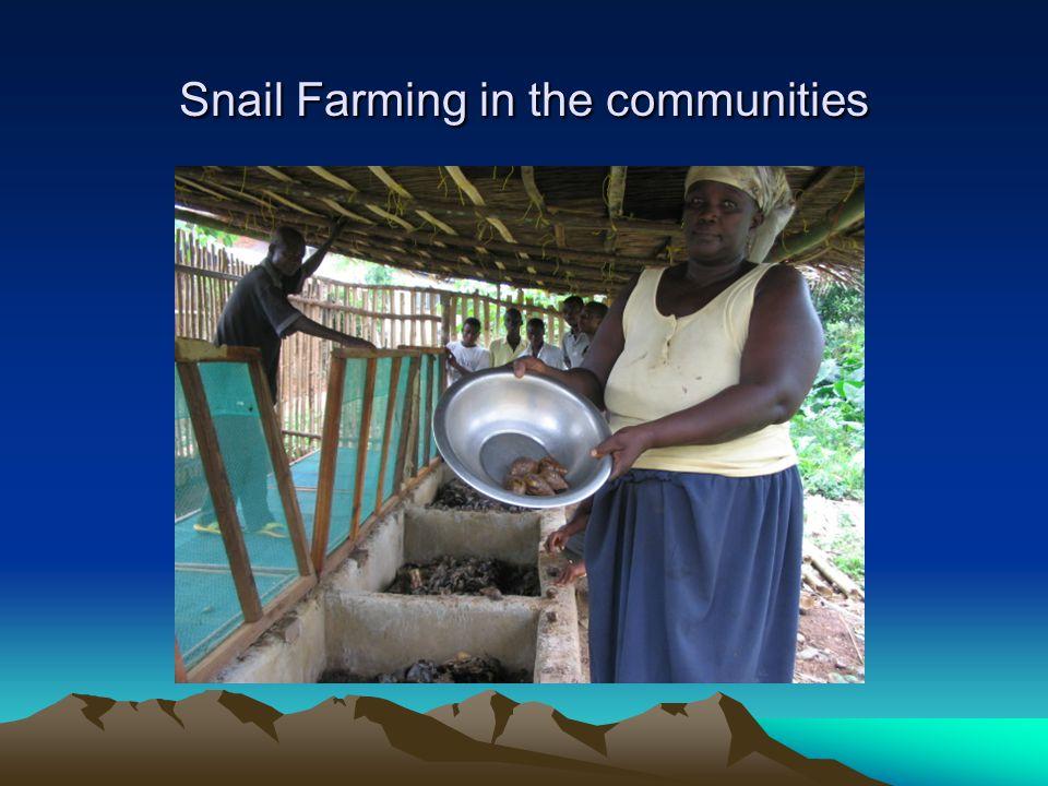 Snail Farming in the communities
