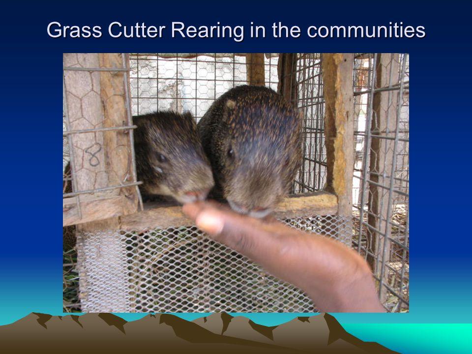 Grass Cutter Rearing in the communities