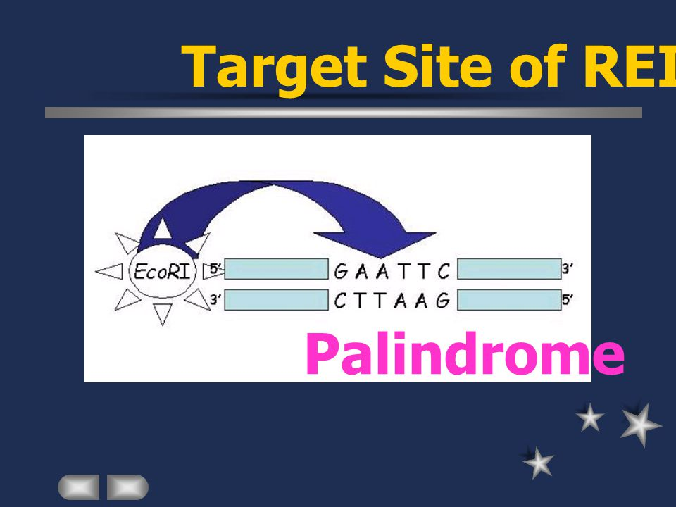 Palindrome Target Site of REII