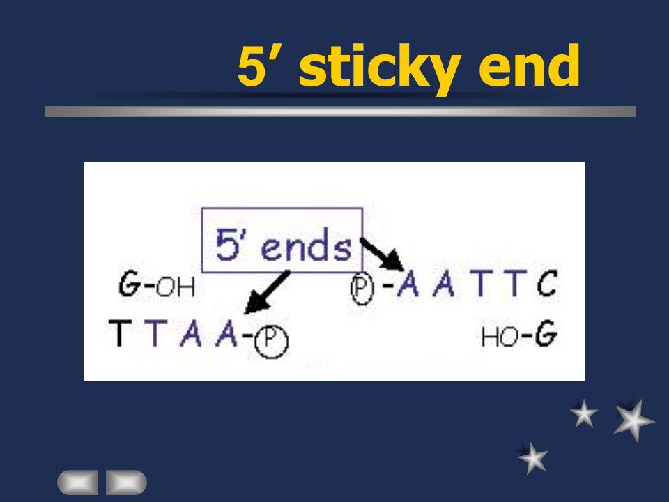 5' sticky end