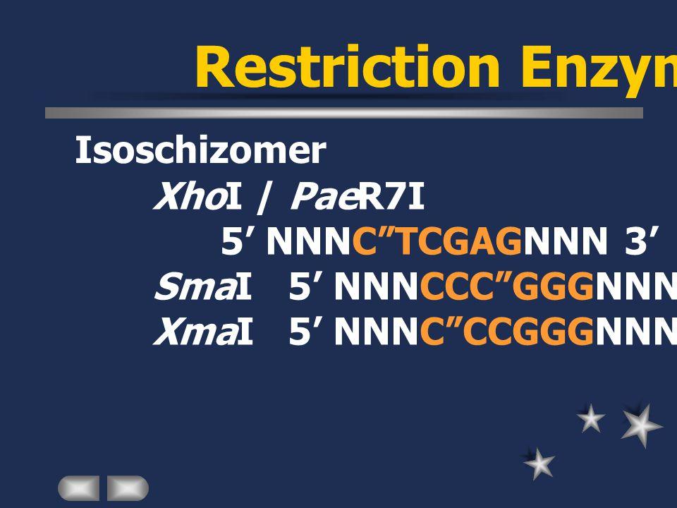 Restriction Enzyme Isoschizomer XhoI / PaeR7I 5' NNNC TCGAGNNN 3' SmaI5' NNNCCC GGGNNN 3' XmaI5' NNNC CCGGGNNN 3'