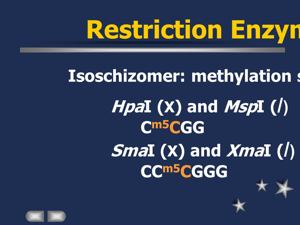 Restriction Enzyme Isoschizomer: methylation sensitivity HpaI ( X ) and MspI ( / ) C m5 CGG SmaI ( X ) and XmaI ( / ) CC m5 CGGG