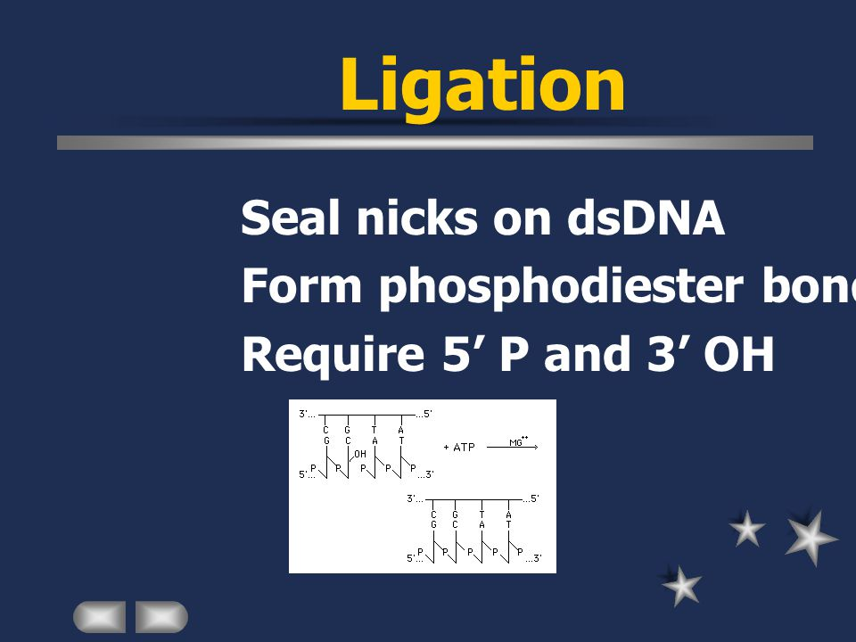 Ligation Seal nicks on dsDNA Form phosphodiester bond Require 5' P and 3' OH