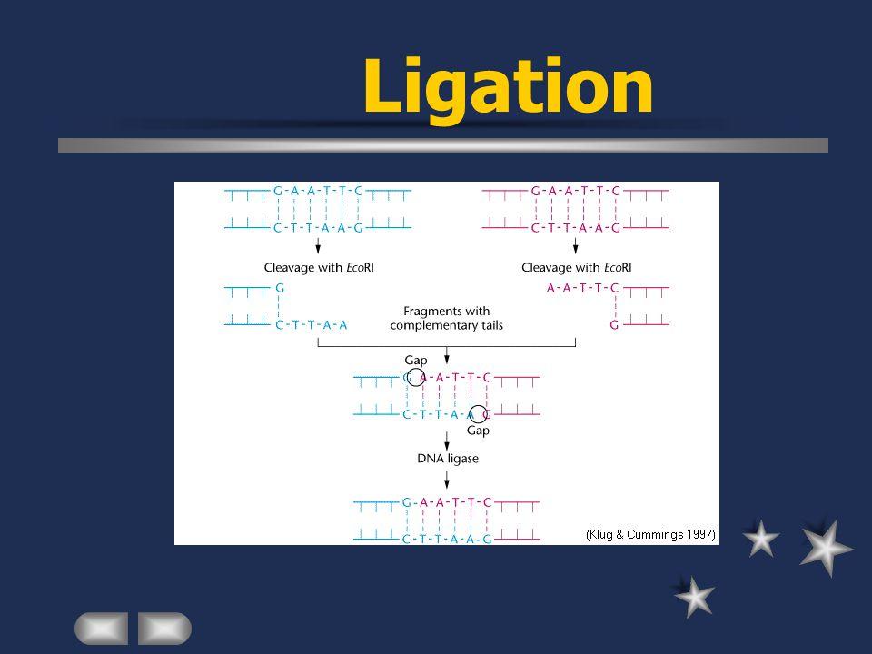 Ligation