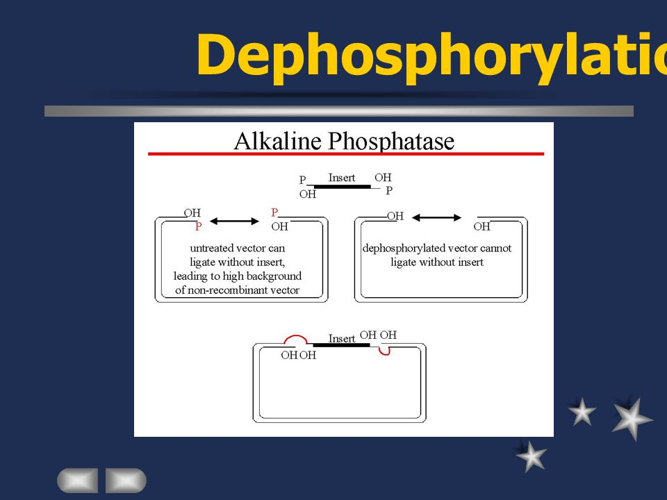 Dephosphorylation