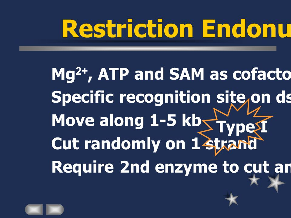 Restriction Endonuclease Mg 2+, ATP and SAM as cofactors Specific recognition site on dsDNA Move along 1-5 kb Cut randomly on 1 strand Require 2nd enzyme to cut another strand Type I