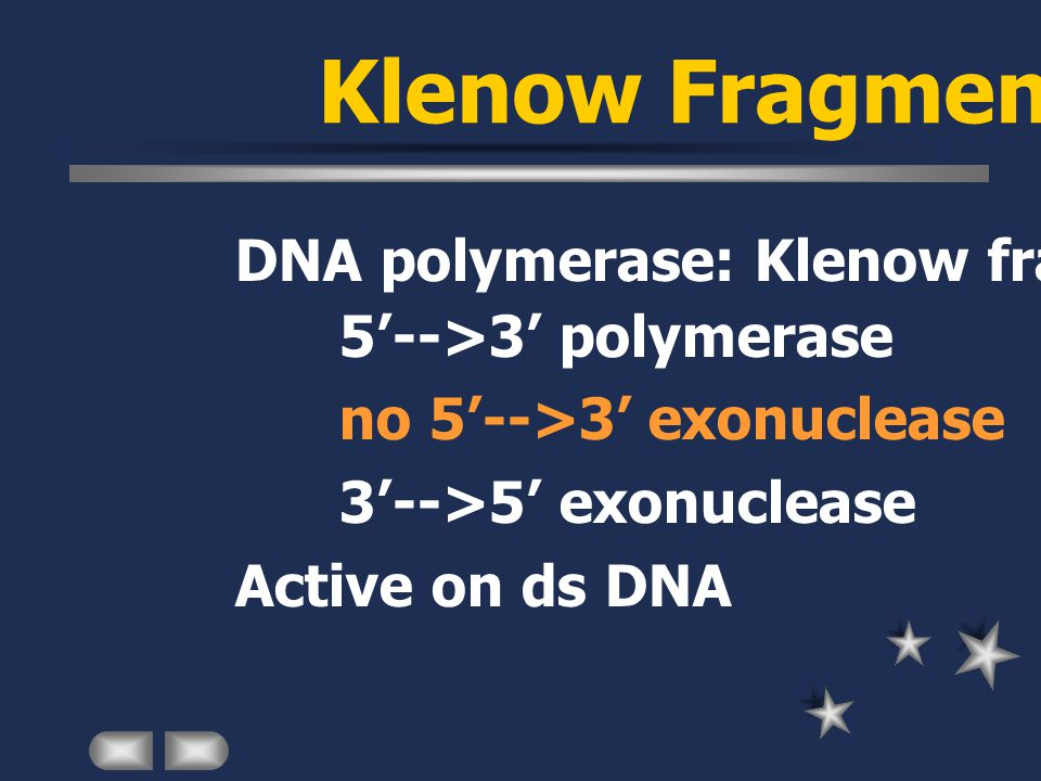 DNA polymerase: Klenow fragment 5'-->3' polymerase no 5'-->3' exonuclease 3'-->5' exonuclease Active on ds DNA Klenow Fragment