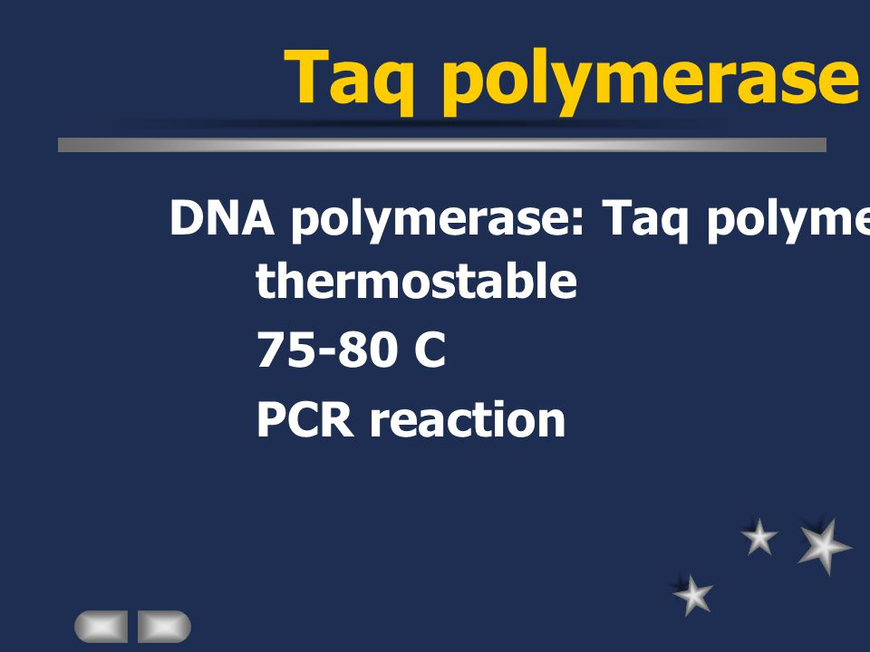 Taq polymerase DNA polymerase: Taq polymerase thermostable 75-80 C PCR reaction