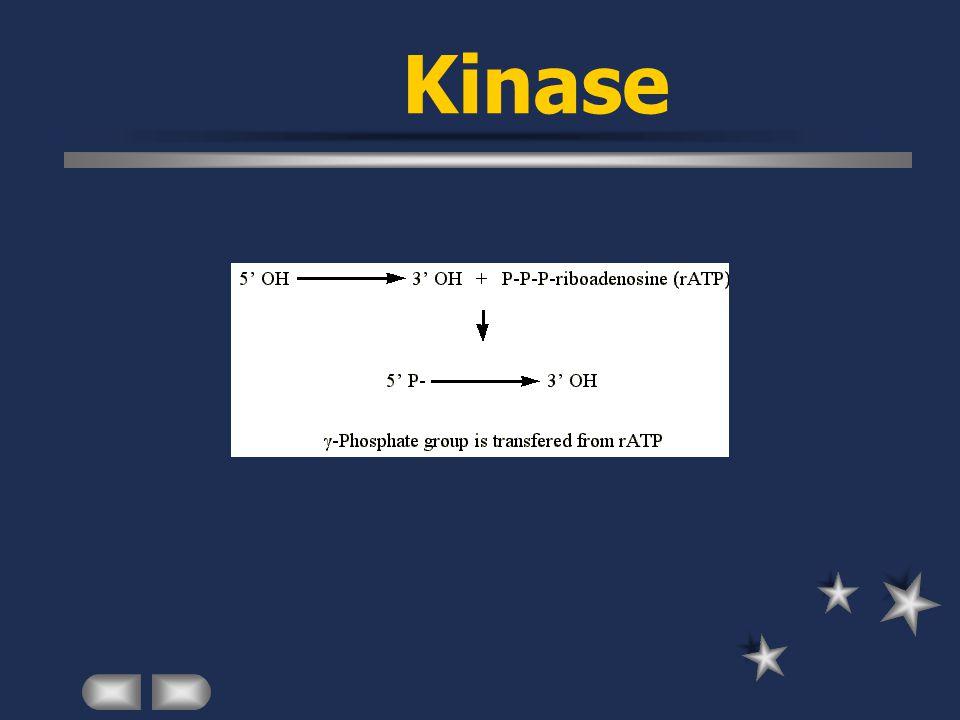 Kinase