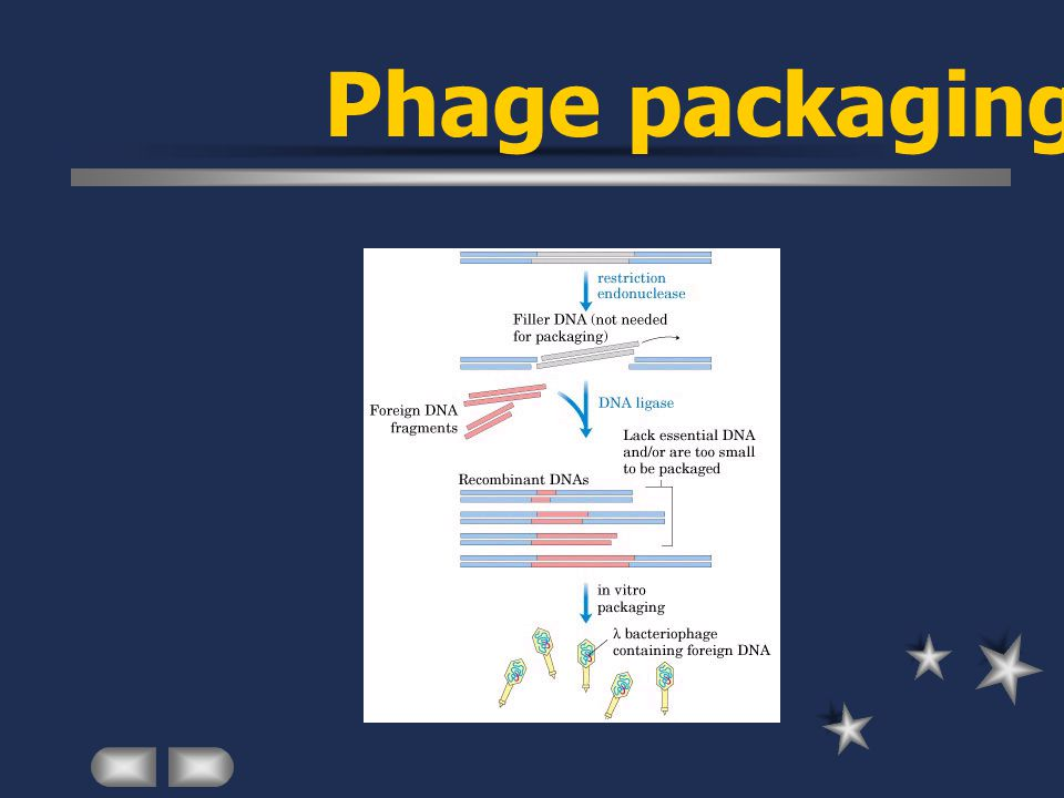 Phage packaging