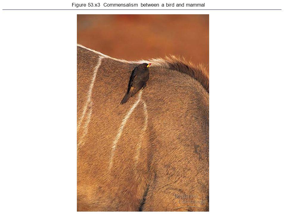 Figure 53.x3 Commensalism between a bird and mammal