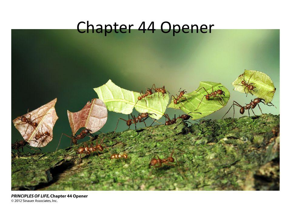 Chapter 44 Opener
