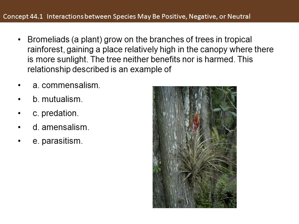 Bromeliads (a plant) grow on the branches of trees in tropical rainforest, gaining a place relatively high in the canopy where there is more sunlight.