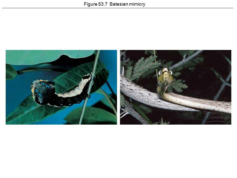 Figure 53.7 Batesian mimicry