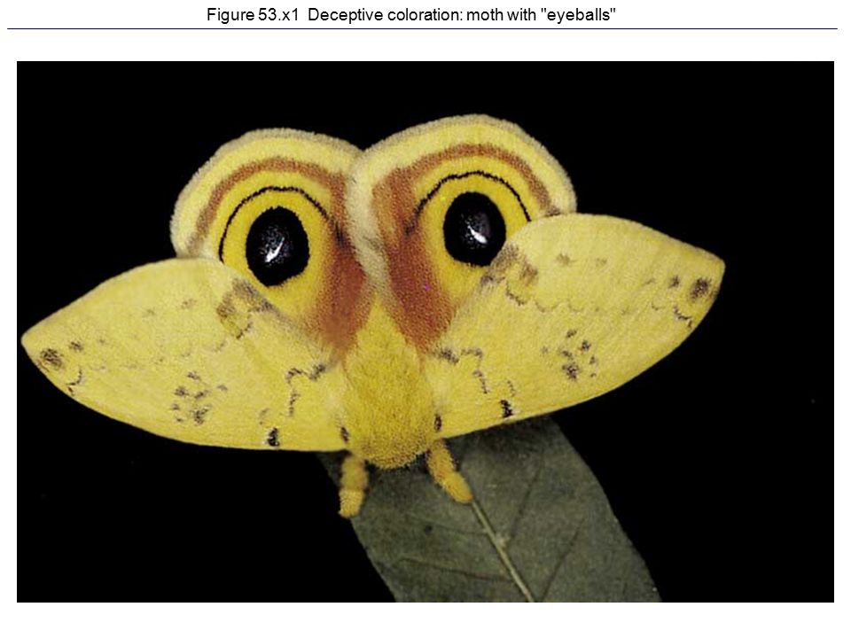 Figure 53.x1 Deceptive coloration: moth with