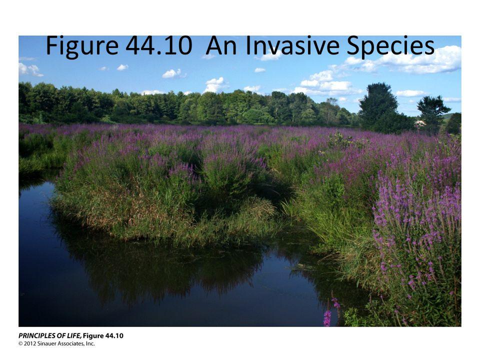 Figure 44.10 An Invasive Species