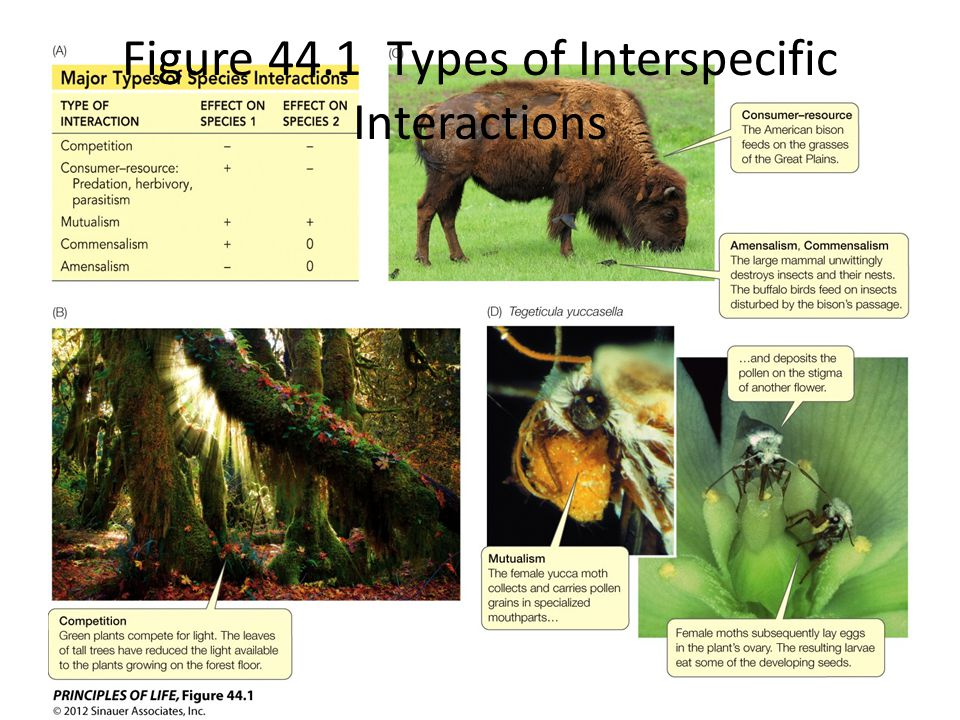 Figure 44.1 Types of Interspecific Interactions