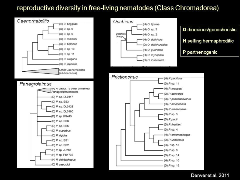 Caenorhabditis reproductive diversity in free-living nematodes (Class Chromadorea) Denver et al.