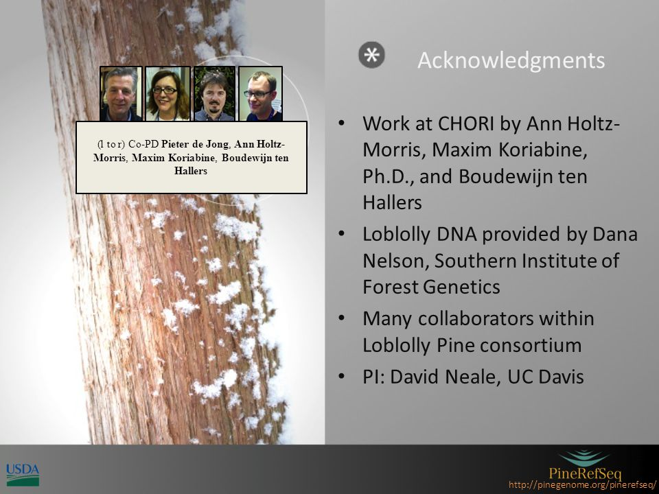 http://pinegenome.org/pinerefseq/ Acknowledgments Work at CHORI by Ann Holtz- Morris, Maxim Koriabine, Ph.D., and Boudewijn ten Hallers Loblolly DNA provided by Dana Nelson, Southern Institute of Forest Genetics Many collaborators within Loblolly Pine consortium PI: David Neale, UC Davis (l to r) Co-PD Pieter de Jong, Ann Holtz- Morris, Maxim Koriabine, Boudewijn ten Hallers