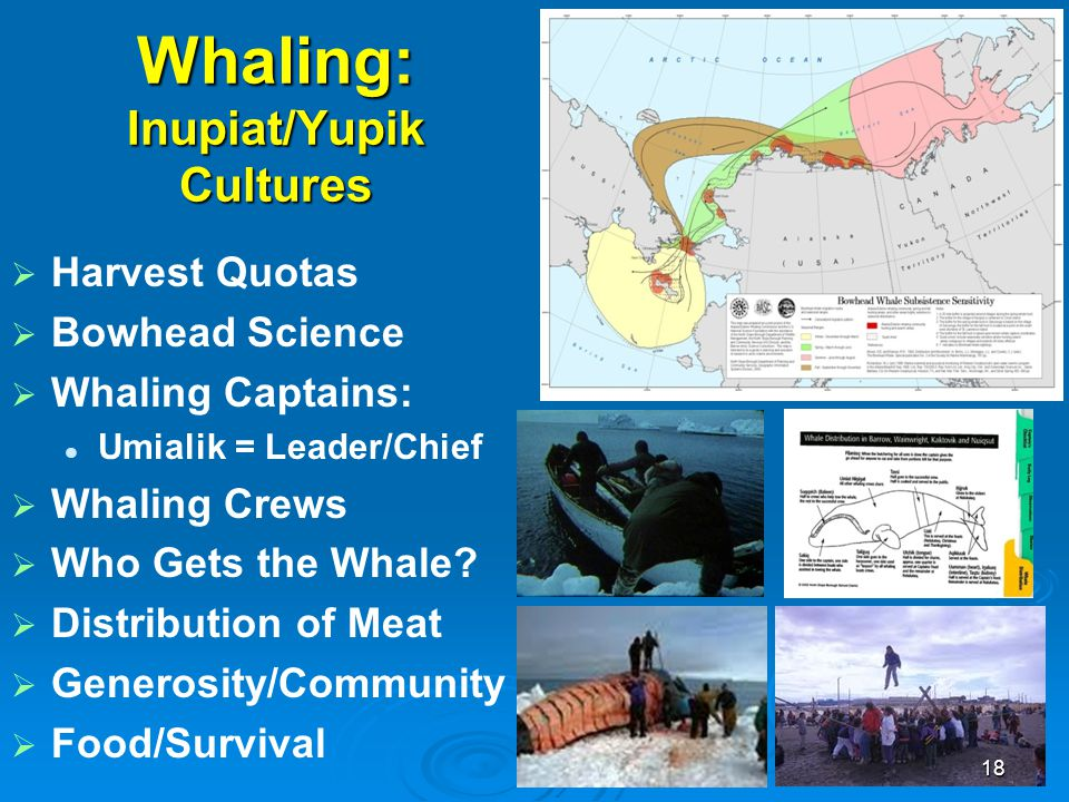 Whaling: Inupiat/Yupik Cultures   Harvest Quotas   Bowhead Science   Whaling Captains: Umialik = Leader/Chief   Whaling Crews   Who Gets the