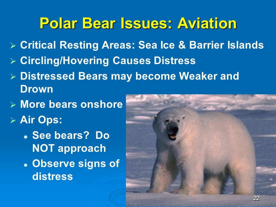 Polar Bear Issues: Aviation   Critical Resting Areas: Sea Ice & Barrier Islands   Circling/Hovering Causes Distress   Distressed Bears may becom