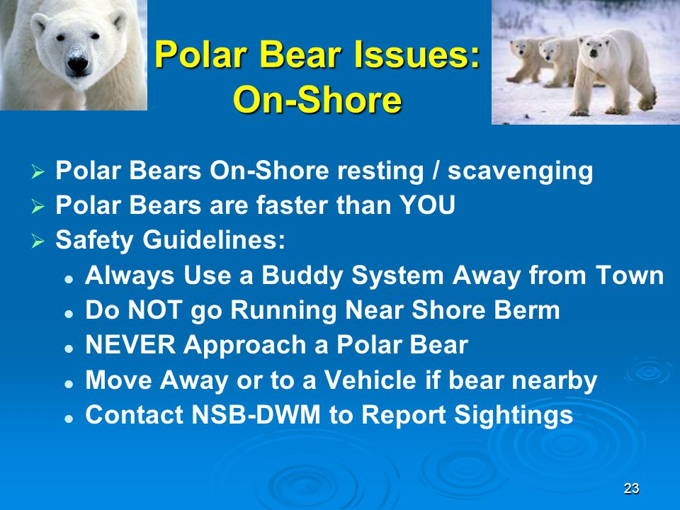 Polar Bear Issues: On-Shore   Polar Bears On-Shore resting / scavenging   Polar Bears are faster than YOU   Safety Guidelines: Always Use a Budd