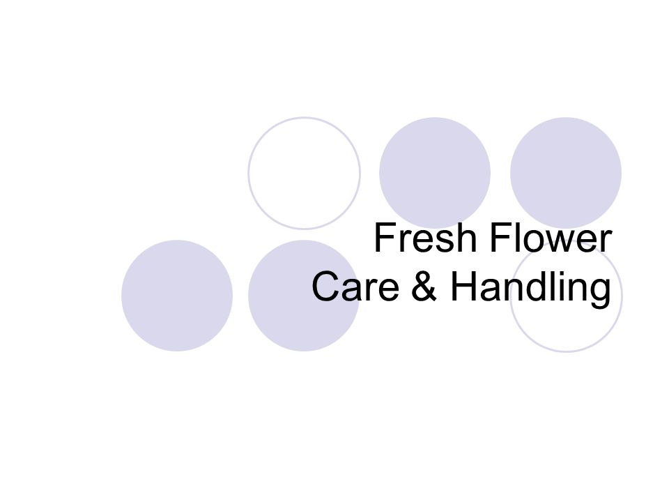 Care and Handling Vase Life-length of time flowers remain beautiful Senescence-flower death