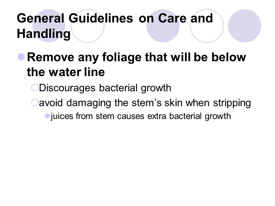 General Guidelines on Care and Handling Remove any foliage that will be below the water line  Discourages bacterial growth  avoid damaging the stem's skin when stripping juices from stem causes extra bacterial growth