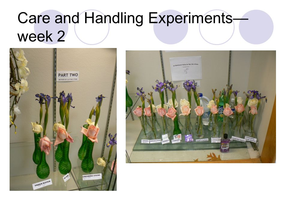 Care and Handling Experiments— week 2