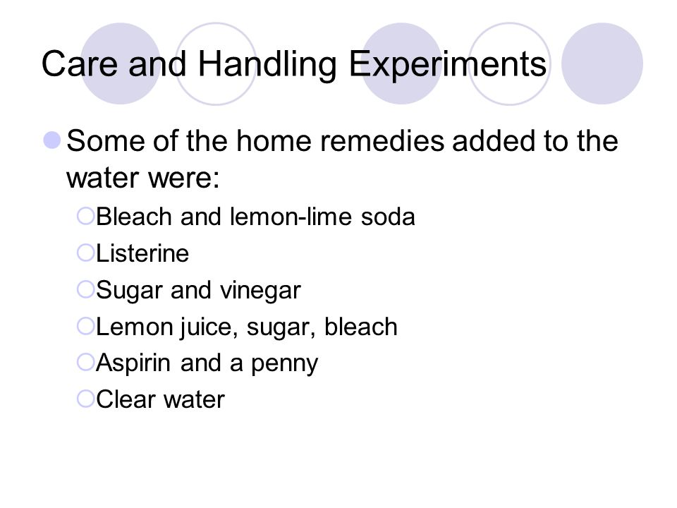 Care and Handling Experiments Some of the home remedies added to the water were:  Bleach and lemon-lime soda  Listerine  Sugar and vinegar  Lemon juice, sugar, bleach  Aspirin and a penny  Clear water