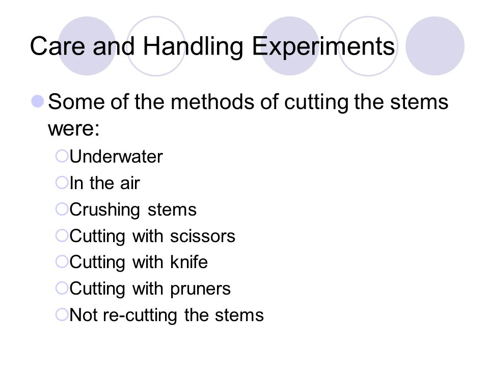 Care and Handling Experiments Some of the methods of cutting the stems were:  Underwater  In the air  Crushing stems  Cutting with scissors  Cutting with knife  Cutting with pruners  Not re-cutting the stems