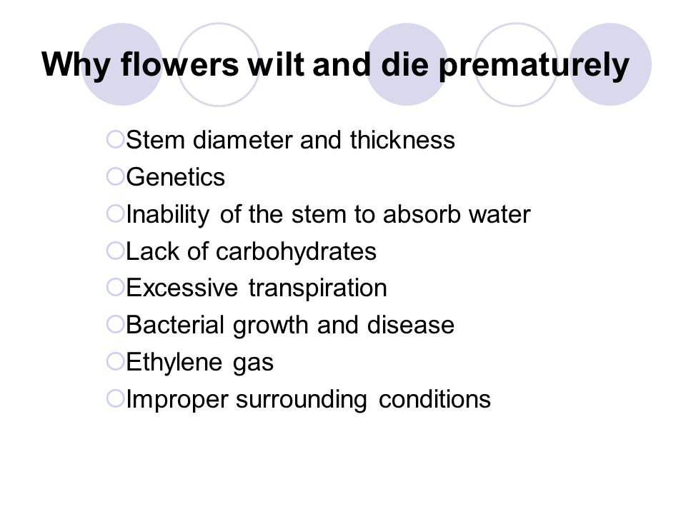 Why flowers wilt and die prematurely  Stem diameter and thickness  Genetics  Inability of the stem to absorb water  Lack of carbohydrates  Excessive transpiration  Bacterial growth and disease  Ethylene gas  Improper surrounding conditions